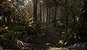 <br>Alumnus <br>Timothy Dries<br> Rainforest scene